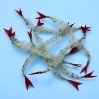 EP™ CRUSTACEOUS CLAW GRASS /8 Claw